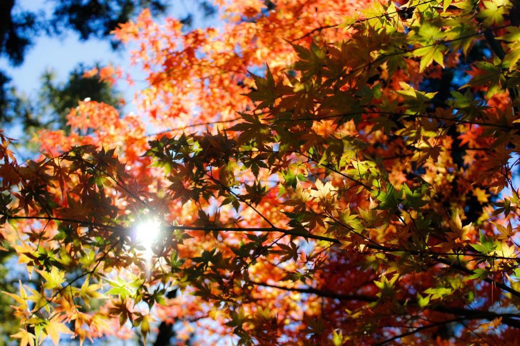 autumn-1209802_1280