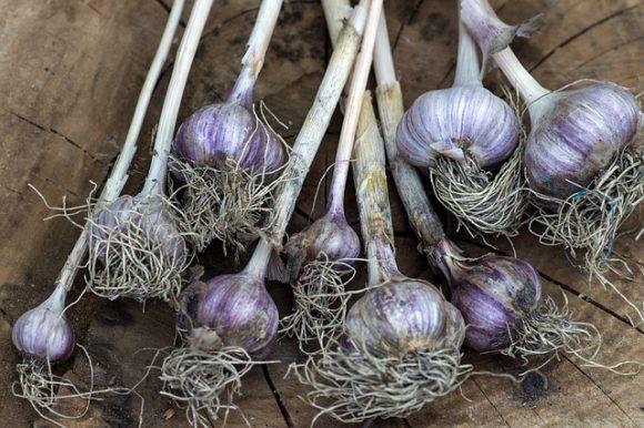 vegetables-927843_640 (1)
