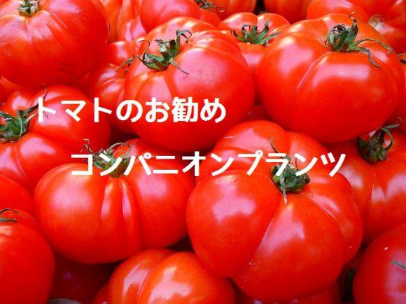 tomato_cp