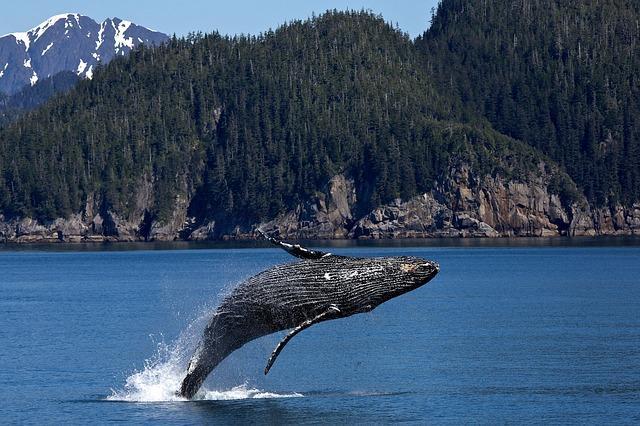 humpback-whale-1984341_640