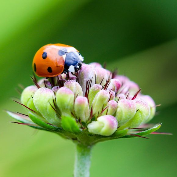 ladybug-1694484_640